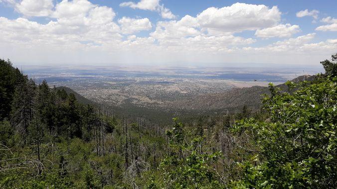 sandia - pino trail